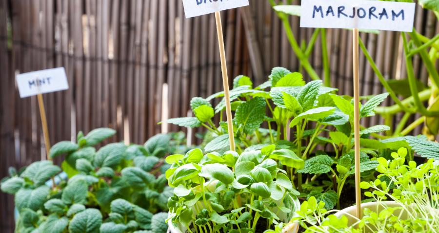 How to design a sustainable garden